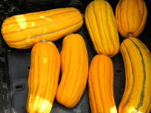 SQUASH, WINTER, DELICATA